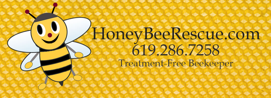 Honey Bee Rescue